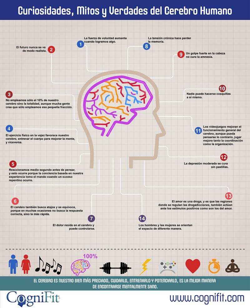 14 curiosidades, mitos y verdades del cerebro humano