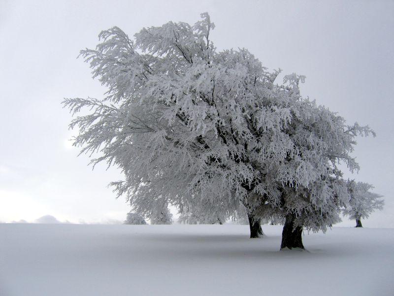 7 consejos para sobreponerte a la depresión invernal