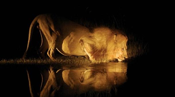 La fábula de El león: cómo dar el paso para afrontar un problema y resolverlo